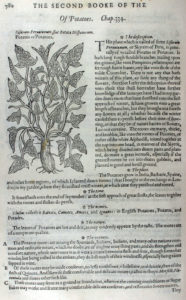 The Herball or Generall Historie of Plantes (1597) p780