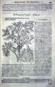 The Herball or Generall Historie of Plantes (1597) p781